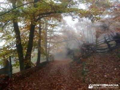 Senda Viriato; Sierra San Vicente; cotos madrid buitrago de lozoya casa bosque rascafria